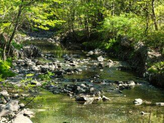 Taylor Creek Park Toronto